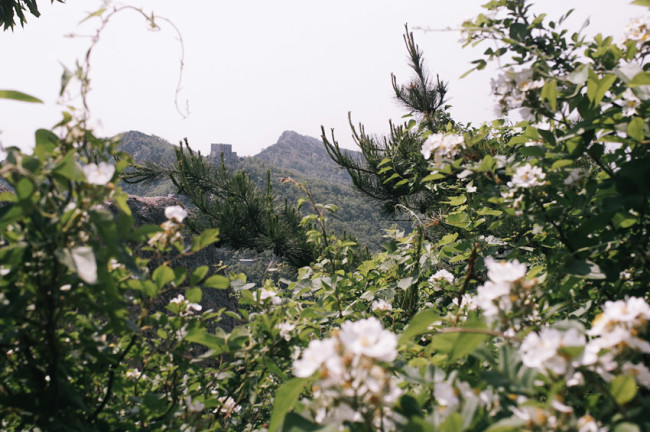 Daqingshan mountain
